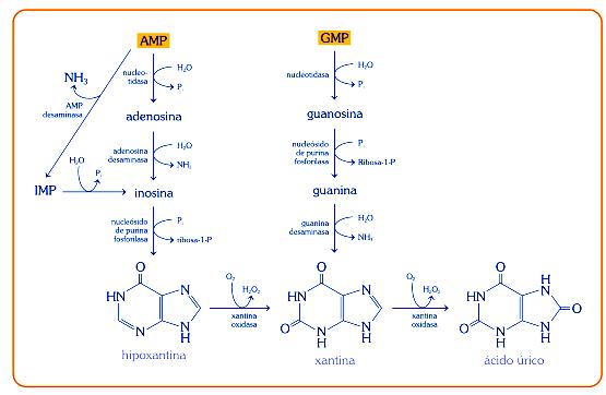recetas para prevenir acido urico consejos para evitar el acido urico omega 3 e acido urico